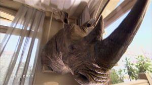 tête de rhinocéros alexis top chef